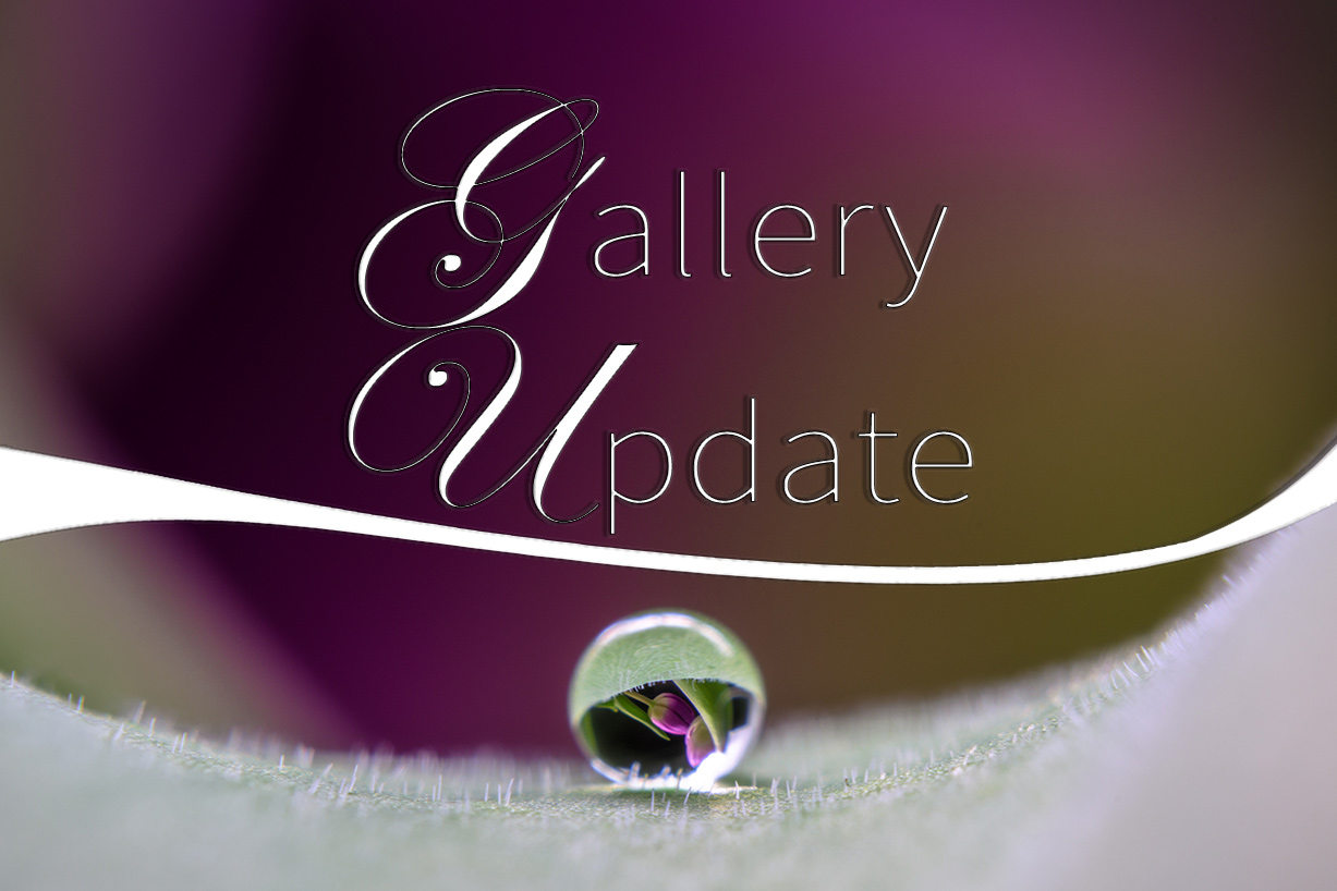 gallery update no. 06
