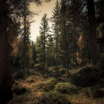 fall_forest_in_dolomites