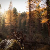 sun_in_dolomites_forest