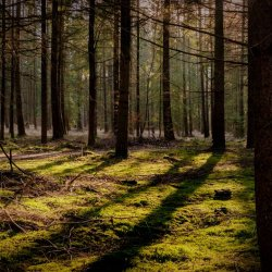 liepnitzsee_sun_through_forest