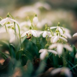 lily_of_the_valley_01