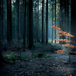 saxon_switzerland_small_in_the_forest