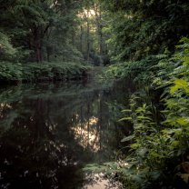 city_jungle_tiergarten