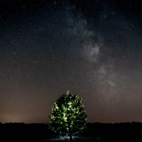 milky_way_lighten_tree