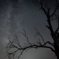 milky_way_over_tree
